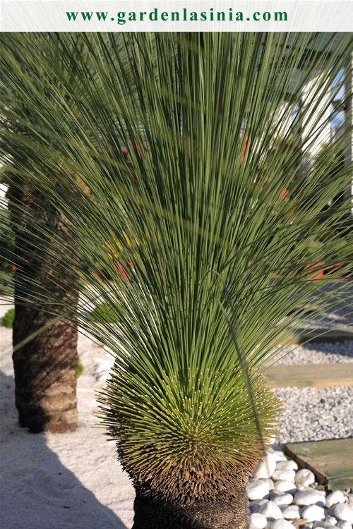 foto de una planta de exterior de garden la snia