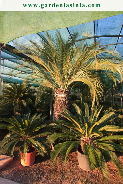 Plantas de exterior productos y servicios la s nia - Jardines de exterior ...